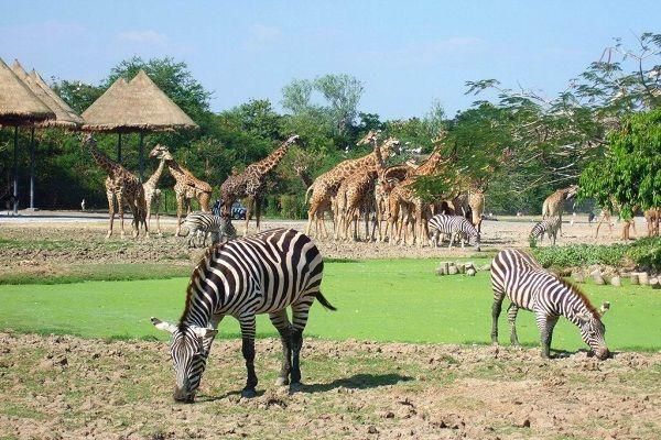 Zoo & Live Animal Shows